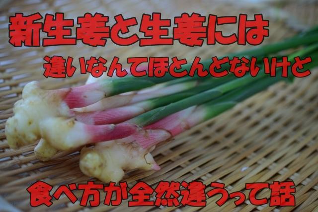 新生姜と生姜の違いに関する話